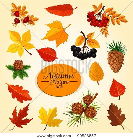 Autumn leaf, fruit and berry icon set. Fallen leaf of maple and oak tree, fall season branches with fruit of rowanberry, forest briar and chokeberry, pine tree cone symbol for autumn nature design