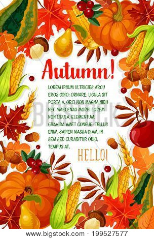 Hello Autumn poster with fall season frame. Autumn leaf, orange pumpkin vegetable, apple fruit, yellow maple foliage, mushroom, acorn, cranberry, wheat and corn cob banner with copy space in center