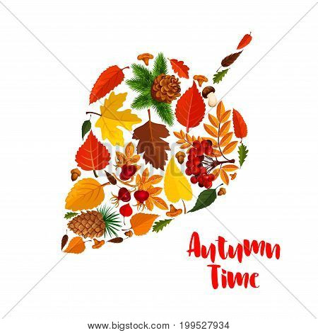 Autumn leaf poster with fall season foliage. Orange maple leaves, forest acorn and mushroom, yellow foliage of chestnut tree, briar and rowan berry, pine and fir cone for fall season nature design