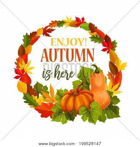 Autumn is here greeting card of pumpkin harvest and leaf foliage wreath of maple, birch or rowan and chestnut tree. Vector seasonal fall or autumn holiday poster of oak, aspen or elm and beech leaves