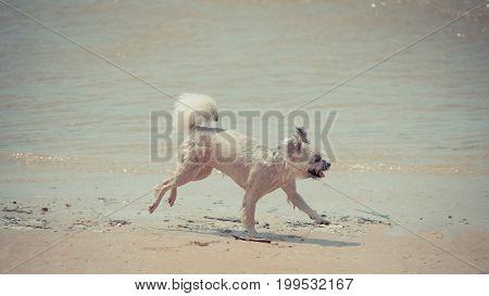 Dog Running Happy Fun On Beach When Travel At Sea