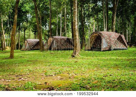 Tent Camping in the Forest Wilderness. Camping Theme.