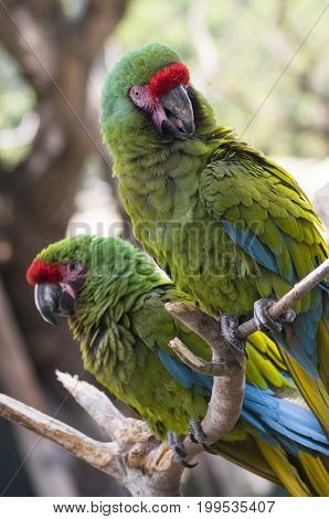 Colorful Parrots perched on a branch at a zoo