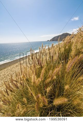 Dune grass with beach in background along the Pacific Coast Highway (PCH)