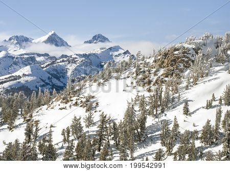 Winter wonderland with trees and snow in Mammoth Lakes, CA.