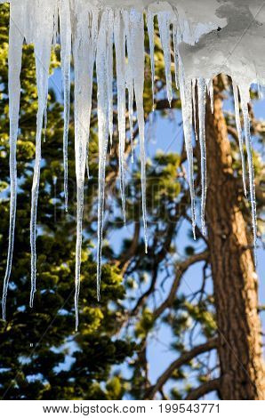 Icicles hanging from a cabin in winter