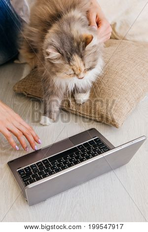 Fluffy cat curiously looks at laptop sitting near her young owner. Charming family pets and people cosiness concept, interest in new technology of daily life