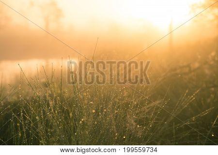 A field of beautiful green sedge grass in morning light. Marsh landscape on Northern Europe. Beautiful swamp landscape.