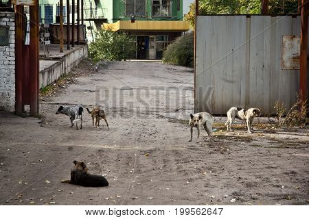 Wild homeless dogs at the entrance to the industrial area