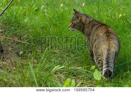 The housecat walking across the nature field.