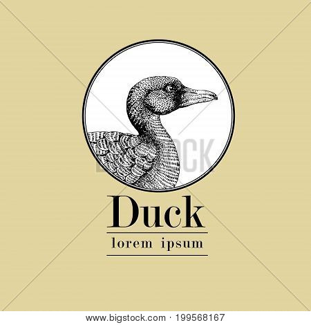 Vector hand drawn duck illustration. Retro engraving style. Sketch farm animal drawing. Isolated fowls image on a white background. Logo template.