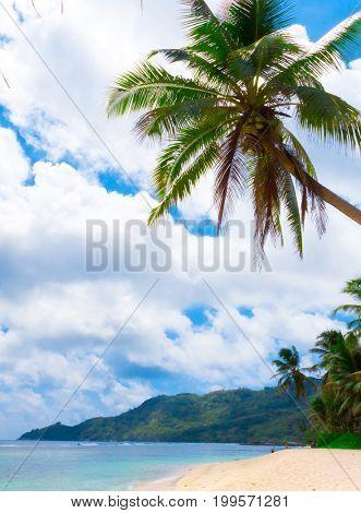 Overhanging Sea Scene