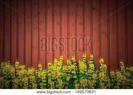 Flowers On A Lawn Near An Old Wooden Fence