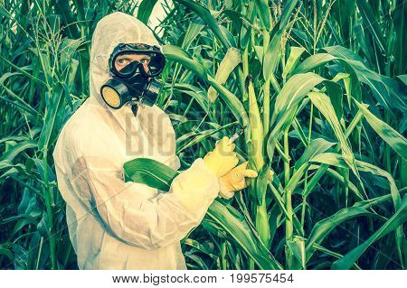 GMO scientist in coveralls and gas mask genetically modifying corn with syringe at maize field - retro style