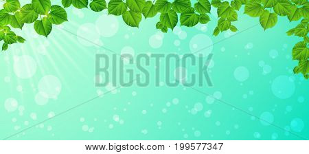 Forest background with sun light coming through the green leaves. Green backdrop with fresh spring foliage sparkles and sunbeams.Young leaves in the rays of spring dawn. Close-up. Nature background.Panorama.