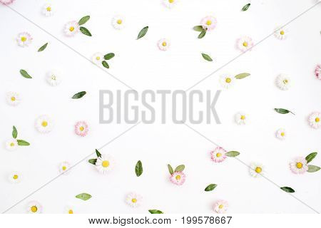 Floral frame with space for text made of white and pink chamomile daisy flowers green leaves on white background. Flat lay top view. Daisy background. Frame of flower buds.