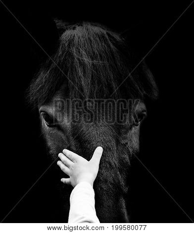 concept: child hand is touching horse head in dramatic tones