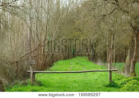 Path in a wood leading to the swamp of Glaugelas.