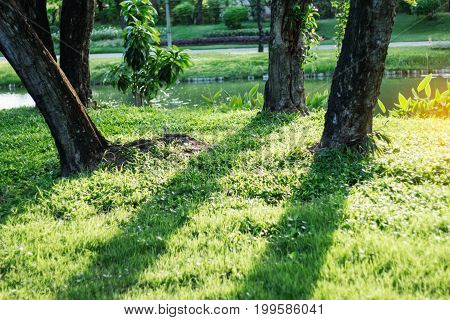 Shadows and trees on grass in the park.