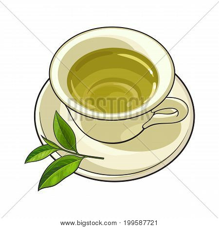 China, porcelain cup, saucer and fresh green tea leaf, sketch vector illustration isolated on white background. Hand drawn porcelain, china mug and saucer set with green tea leaf
