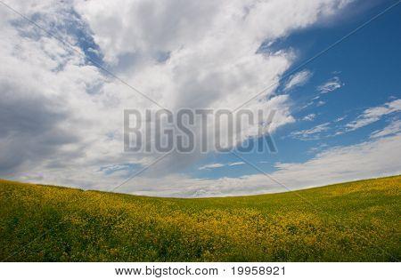 Field in Normandy