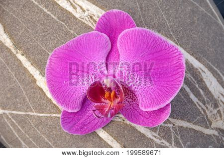 Macro of orchid and striped stones texture