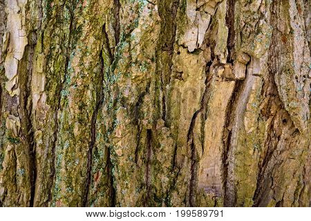 Old tree bark macro photograph for closeup texture