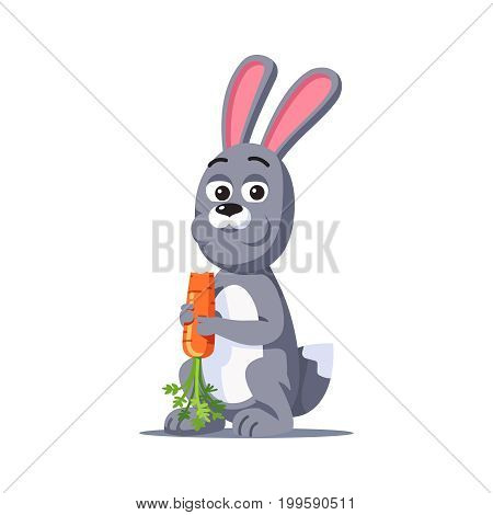 Grey rabbit with big ears holding in paws and eating carrot. Cartoon bunny animal chewing fresh vegetable food. Hare looking at viewer. Flat style vector illustration isolated on white background.