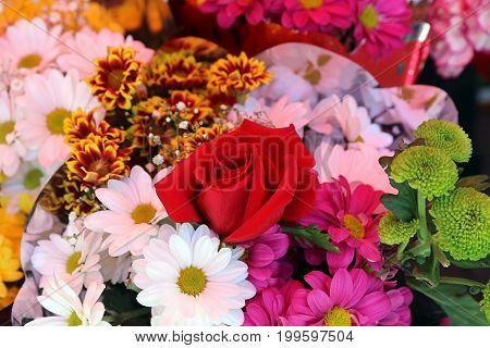 Bouquet of wonderful fresh Summer Flowers closeup