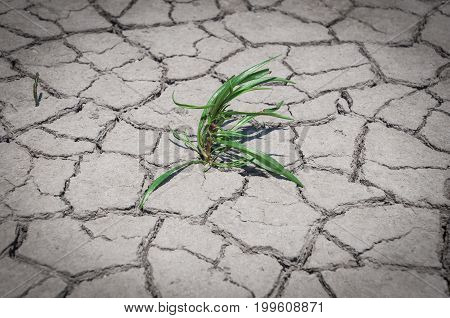 Green grass grew in dry cracked ground close up
