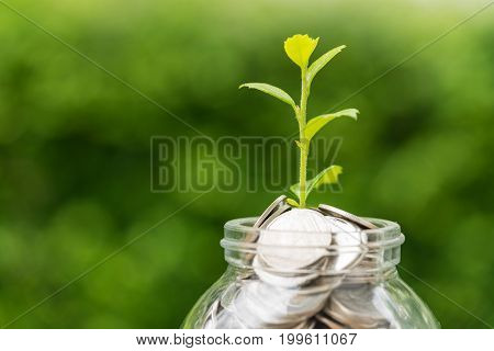 Selective focus on green sprout plant on jar with full of coins as growth finance investment concept.