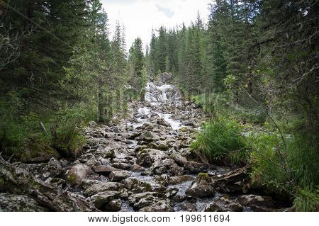 Of Waterfall In Forest Of Altai Mountains.