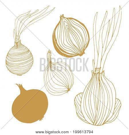 Seasonal autumn vegetables. Hand drawn vector set. Onions