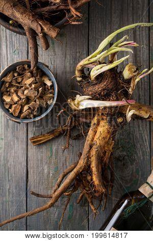 Preparing the medicinal root of elecampane. Top View