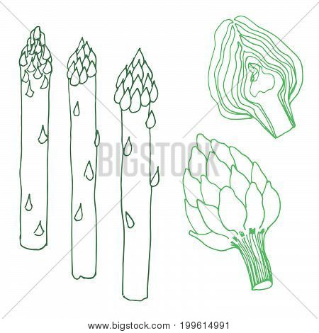Seasonal autumn vegetables. Hand drawn vector set. Asparagus & artichoke