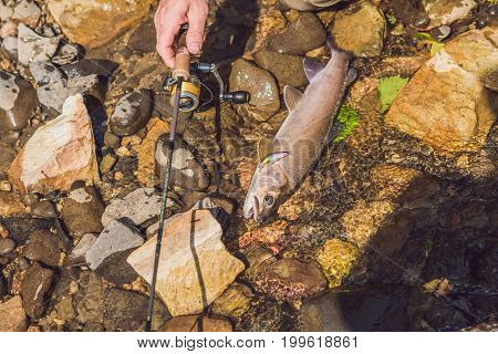 The Fisherman Looks At The Caught Fish