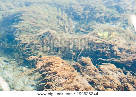Underwater shot of the grass and plants are immersed in pure water, the bottom of the lake