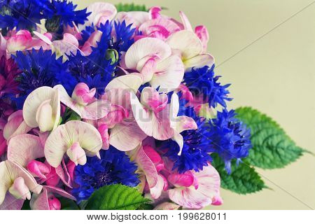 Bouquet of cornflowers and sweet peas closeup toned gray wall
