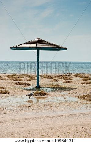 The Parasol And Seagull On Empty Sandy Beach