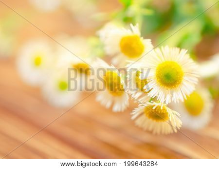 Beautiful blurred wild chamomile flowers against the wooden background (very shallow DOF selective focus on the petals) copyspace on the left