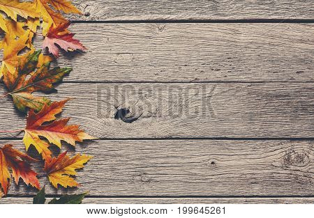 Autumn season background, yellow maple leaves on rustic wood background with copy space.
