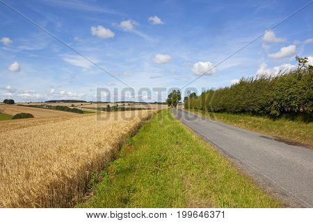 Rural Road And Golden Barley