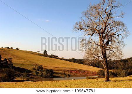 colina com arvore e galhos secos com um lago