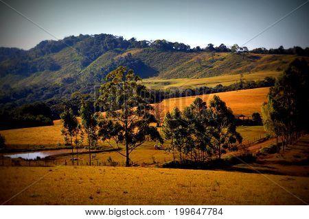 paisagem com verdes campos e arvores frondosas
