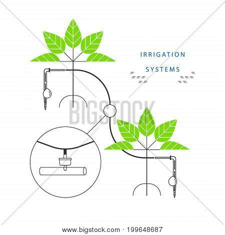 Drip irrigation system. Linear infographics. Vector illustration.