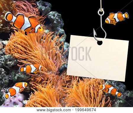Sea anemone and clown fish and empty sheet of a paper hanging on a fishing hook in marine aquarium