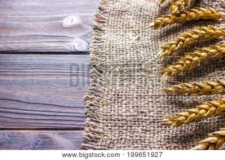 ears of wheat on black background texture wheat on Burlap