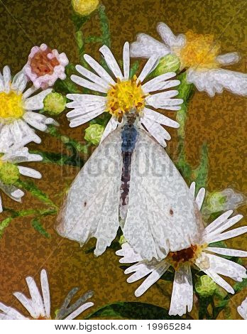 White moth attached to a daisy/sponge paint effect