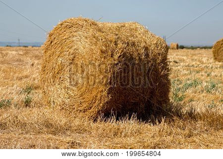 Big roll harvested straw on the mown field. Round bale of straw close-up.