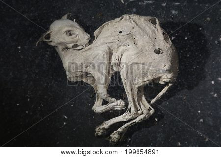 The mummified remains of a cat with dark background